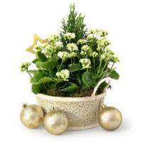 Buy cheap Winter Garden from wholesalers