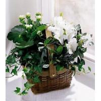 Quality White Assortment Basket - C29-2960 for sale