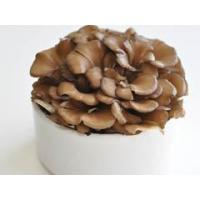 Quality Maitake mushroom extract Standardized Extract for sale