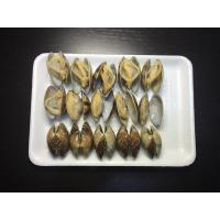 Shellfish Series Short-necked Clam