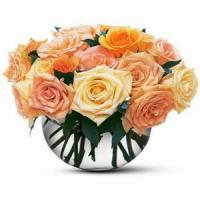 Buy cheap Light Pastel 12 NO.77 shenzhen flower delivery from wholesalers