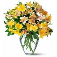 Quality Assorted Alstromeria Mix NO.70 shenzhen flower delivery for sale