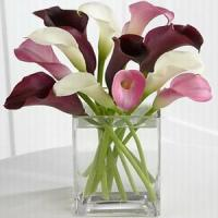 Quality Calla Dreams NO.72 shenzhen flower delivery for sale