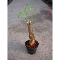 Buy cheap Pot plant Bottom in Pot from Wholesalers
