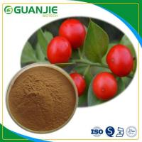 Butcher's Broom P.E Ruscus Aculeatus Extract Hot Sale Ruscogenin Powder L Hot Sale And Sample Free