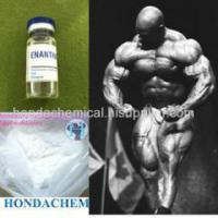 Quality White Powder Testosterone Raw Steroid 250mg/ML Testosterone Enanthate for bodybuilding for sale