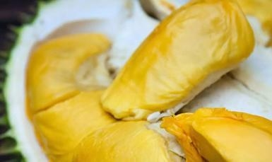 China Attract investment Import durian investment