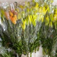 Buy cheap Fresh Lily Flowers from wholesalers