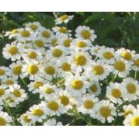 Buy cheap Essential oils Chamomile essential oil from wholesalers
