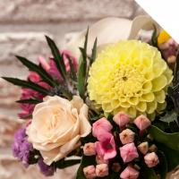Buy cheap Dahlia from wholesalers
